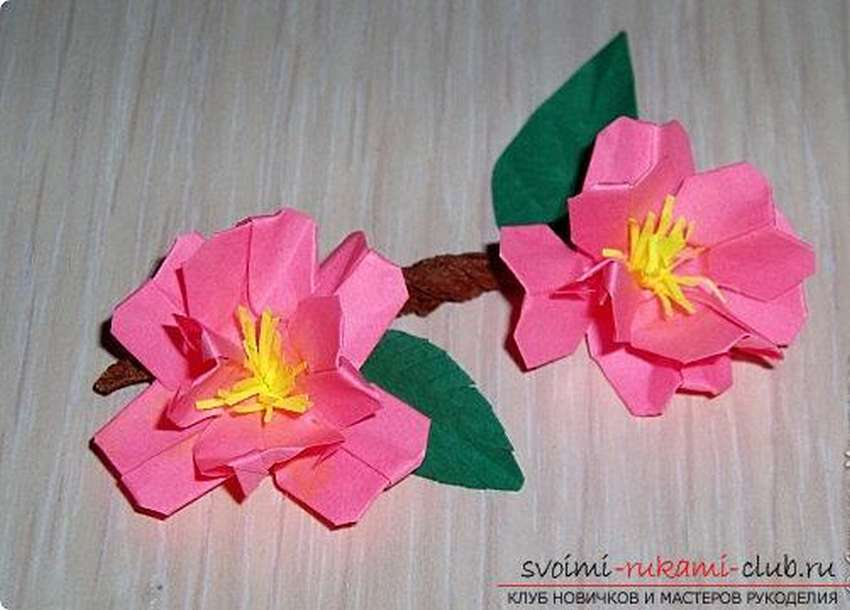 цветок сакуры оригами схема