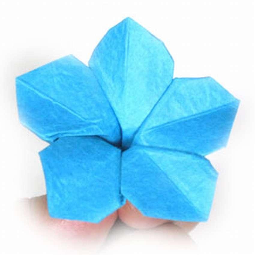 сочи незабудка оригами из цветной бумаги пошагово увидим, как производят