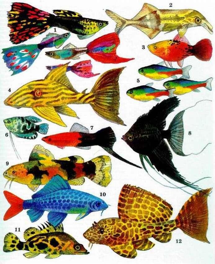 Все виды аквариумные рыбки в картинках
