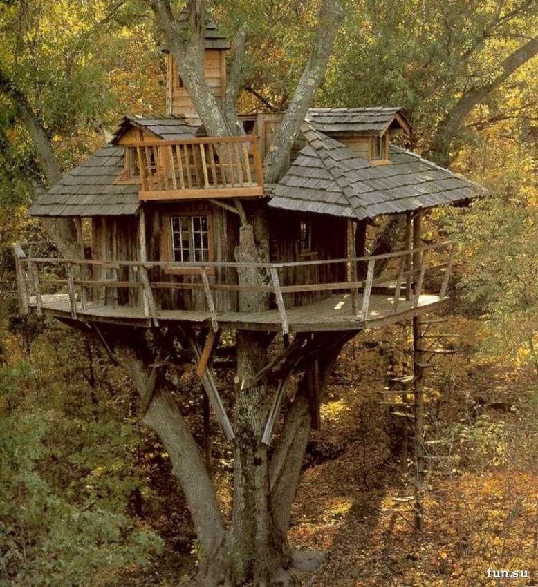 спец-средства, осле дом на дереве в лесу фото это очень стабильная