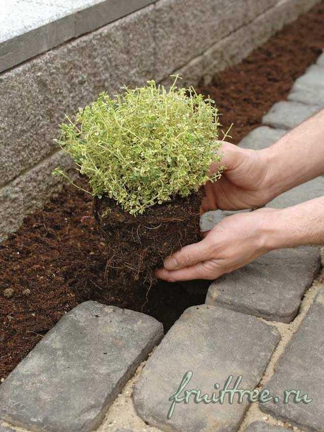 Садовая дорожка из брусчатки своими руками