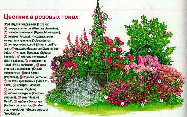 схема розового цветника