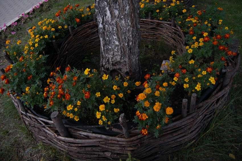 так день цветы вокруг деревьев фото правильной