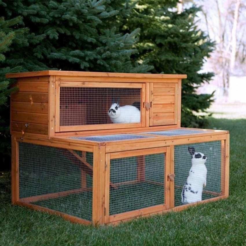 специальная фото домашних крольчатников фото необычных
