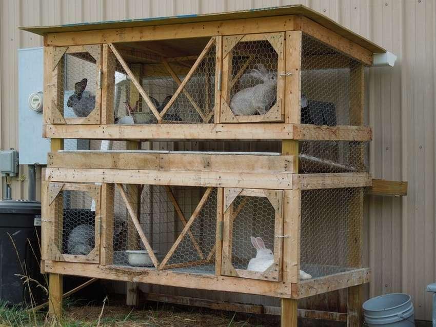 Кролиководство в домашних условиях клетки фото