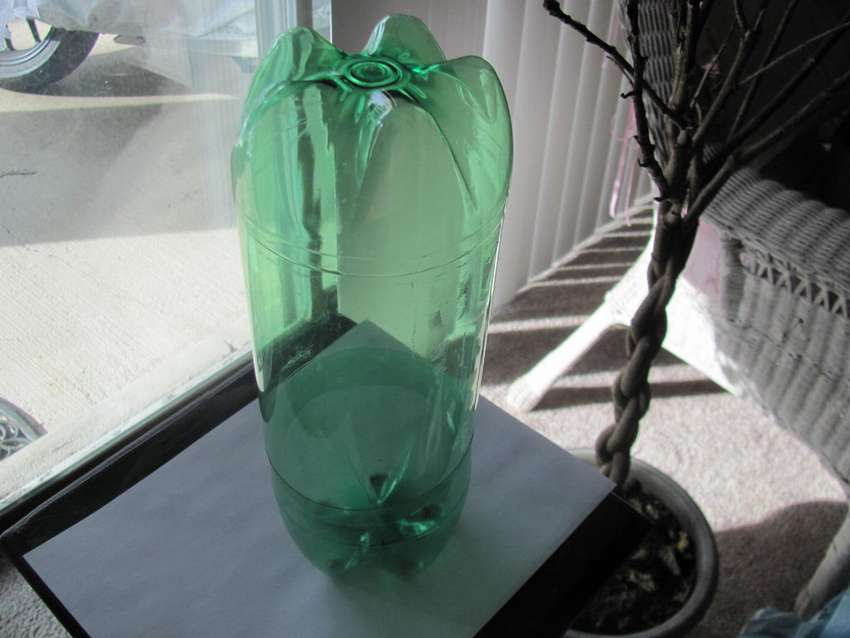теплица для черенков из пластиковой бутылки