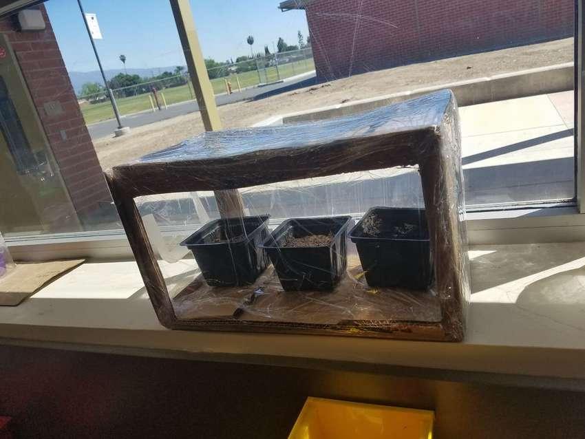 мини-парник в картонной коробке