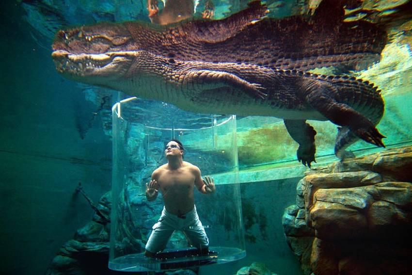 Бассейн с крокодилами